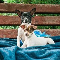 Adopt A Pet :: Tia Tina - Salt Lake City, UT
