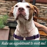 Adopt A Pet :: Limerick - Fairport, NY