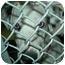 Photo 3 - Dachshund/Dalmatian Mix Dog for adoption in Harbor City, California - MyrnaPaloma