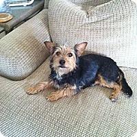 Adopt A Pet :: Skittles - Goodyear, AZ