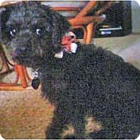 Adopt A Pet :: Dallas - Scottsdale, AZ