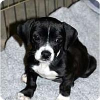 Adopt A Pet :: Bell - Fresno, CA