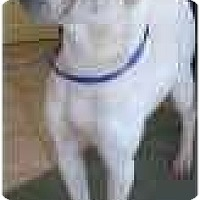 Adopt A Pet :: Annie - Bethesda, MD