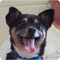 Adopt A Pet :: Pablo - Plainfield, CT