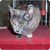 Adopt A Pet :: Natasha - Saskatoon, SK