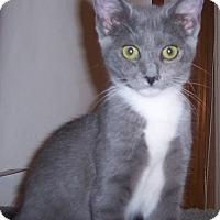 Adopt A Pet :: Lenox - Richmond, VA