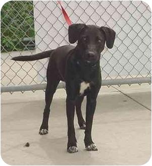 Terrier (Unknown Type, Medium) Mix Dog for adoption in Austin, Minnesota - Tike