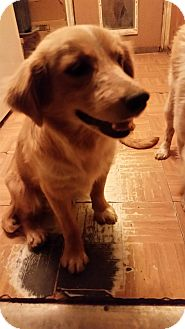 Australian Shepherd Mix Dog for adoption in Tucson, Arizona - Marteen