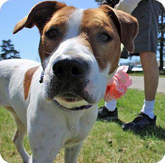 Fox Terrier (Smooth)/Terrier (Unknown Type, Medium) Mix Dog for adoption in Troy, Michigan - Jada