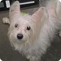 Adopt A Pet :: Whisper - Sheridan, IL