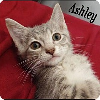 Adopt A Pet :: Ashley - Huntley, IL