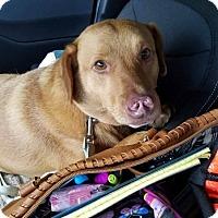 Adopt A Pet :: Byden - Austin, TX