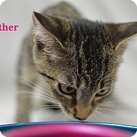 Adopt A Pet :: Heather - Miami Shores, FL