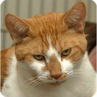 Adopt A Pet :: Spud - Warminster, PA