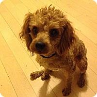 Adopt A Pet :: Rudy - Whittier, CA