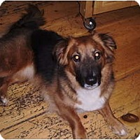 Adopt A Pet :: Ziva - New Boston, NH