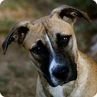 Adopt A Pet :: Junea - Naugatuck, CT