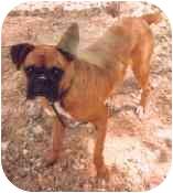Boxer Dog for adoption in Tahlequah, Oklahoma - Delilah