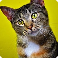 Adopt A Pet :: Kelly - Fort Smith, AR