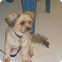 Adopt A Pet :: Bobby - Lockhart, TX