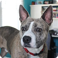 Adopt A Pet :: Luke - Parsippany, NJ