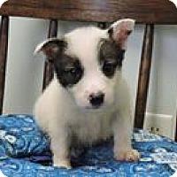 Adopt A Pet :: Poppy - Cottonport, LA