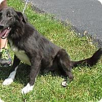 Adopt A Pet :: Corbin - Reeds Spring, MO
