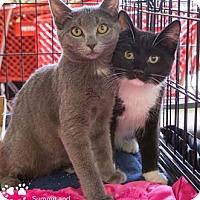Adopt A Pet :: Rutherford - Merrifield, VA