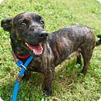 Adopt A Pet :: Kassidy - Atlanta, GA