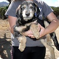 Adopt A Pet :: WILLY - Corona, CA