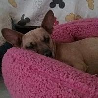 Adopt A Pet :: Alvin - Monrovia, CA