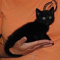 Adopt A Pet :: Bugsy - Parsons, KS