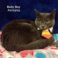 Adopt A Pet :: BABY BOY - Conroe, TX