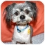Photo 2 - Shih Tzu/Terrier (Unknown Type, Small) Mix Dog for adoption in Bellflower, California - Virgil