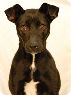 Feist Mix Dog for adoption in Newland, North Carolina - Jezebel