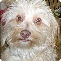 Adopt A Pet :: Dinky - Lucerne Valley, CA
