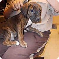 Adopt A Pet :: Barkley - Antioch, IL