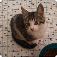 Adopt A Pet :: Rambo - Troy, OH