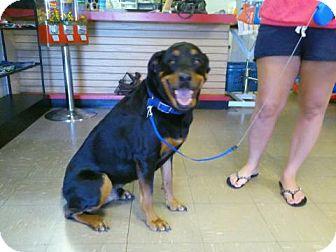 Rottweiler Dog for adoption in Las Vegas, Nevada - Max