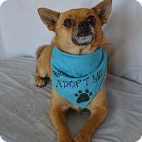 Adopt A Pet :: Skippy - Aurora, CO