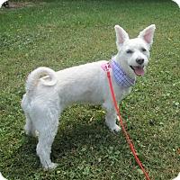 Adopt A Pet :: Coqotte - Rigaud, QC