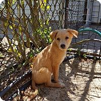 Adopt A Pet :: Maxwell - Middlesex, NJ