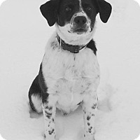 Adopt A Pet :: Angus Young II (Courtesy Listing Evansville, IN) - Highland, IL