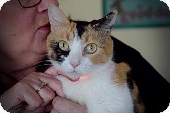 Domestic Shorthair Cat for adoption in Wichita, Kansas - Magic