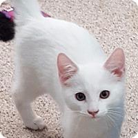 Adopt A Pet :: Blake - Pasadena, CA