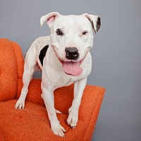 Mixed Breed (Large) Mix Dog for adoption in Mission Hills, California - Boy