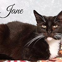 Adopt A Pet :: Jane - Fall River, MA