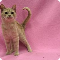 Adopt A Pet :: Isabelle - Redwood Falls, MN