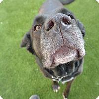Adopt A Pet :: Zoe - Meridian, ID
