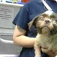 Adopt A Pet :: DAVE - Atlanta, GA